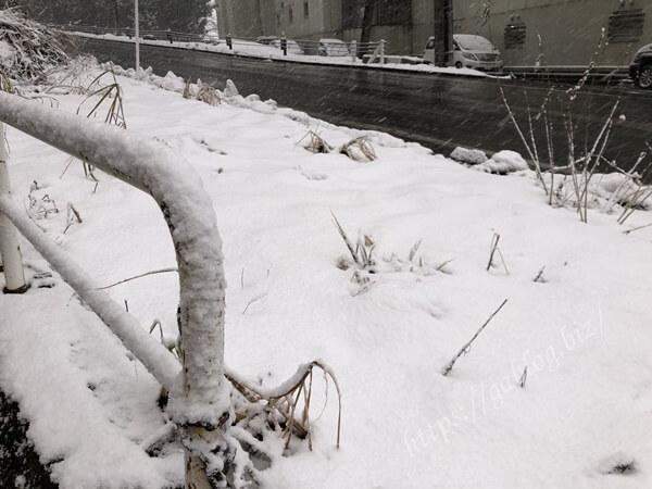 岩原スキー場 積雪
